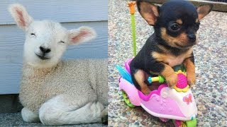 Baby Animals 💗 Funny Cats and Dogs Videos Compilation 2020 | Perros y Gatos Recopilación|Puppies TV