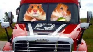 ! Funny Hamsters 10!