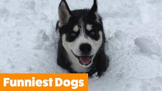 Very Best of Funny Dogs | Funny Pet Videos