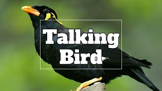 Funny Birds Sing| Dance and Imitate Sounds | Talking Mynah | Pritom Roy Palash
