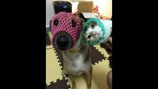Cute Dog and Cat♥ Funny Cats and Dogs Videos Compilation 2020