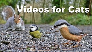 Videos for Kittens and Cats to Watch – Birds and Squirrels  on The Ground