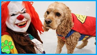 Cute Dogs Reaction To Halloween Costumes I Logan The Adventure Dog