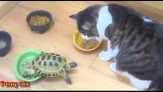 Funny Animal Angry turtle attacks cute cats
