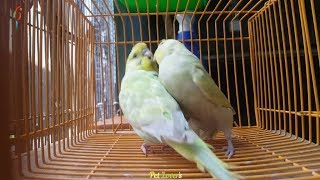 Funny Parrots & Cute Birds Video Compilation – Wanna Laugh Watch this Funniest Video #03