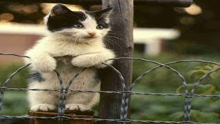 Cats Talking With Their Humans | Funny Cats Yelling  Compilation
