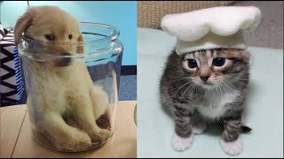Cutest Baby Dog and Cat – Cute and Funny Dog Videos Compilation #3