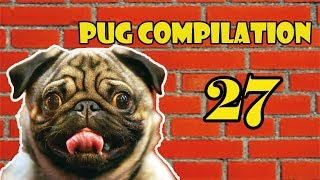 Pug Compilation 27 – Funny Dogs but only Pug Videos | Instapugs