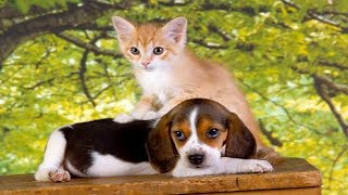 Funny Cats | Funny Dogs Compilation #7