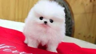 Cute pomeranian puppies and Cute dogs with names