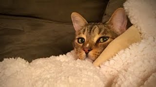 Funny and Cute Cats 😂🐱Hilarious Cats (Full) [Funny Pets]