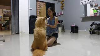 LOVELY SMART GIRL PLAYING BABY CUTE DOGS AT HOME HOW TO PLAY WITH DOG & FEED BABY DOGS #28