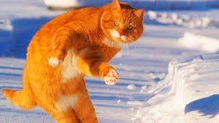Funny Cats Playing  😻 Cute Cats (Part 2) [Funny Pets]