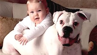 Funny Cats And Dogs Playing With Babies Compilation 2015 || NEW HD