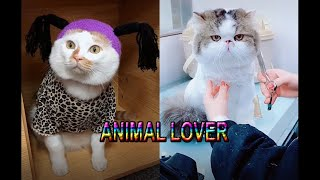 Moew Moew Baby Cats Cute and Funny Dog Videos Compilation #31 Animal Lover