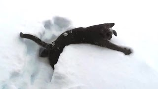 Kittens Discovering Snow For The First Time
