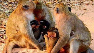 Top Three Cutest Baby Monkeys, Jilla, Delena and Mia! This Year We Have Three Baby Only!