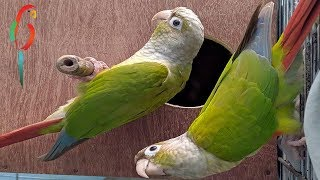 FUNNIEST & ADORABLE PET PARROTS | Awesome Videos Of Cute And Funny Birds