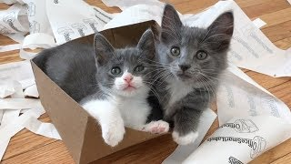 Kittens Love Trash! (Enrichment Ideas!)