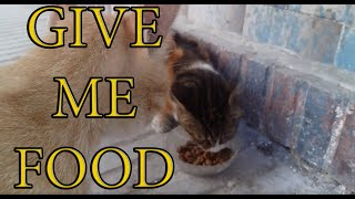 To Spend A Day With Stray Cats (Cute Cats -Adorable Cats) 3