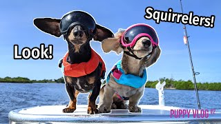 Ep#9: The Dogs Go to Florida, Find SQUIRRELERS! – Cute Puppy Vlog