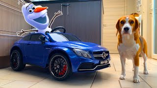 Frozen Olaf vs Dogs PRANK | Funny Dogs Louie and Marie