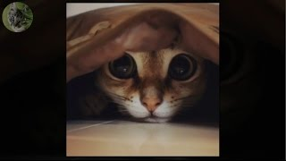 COMPILATION OF FUNNY CATS DECEMBER 2016 PART 2