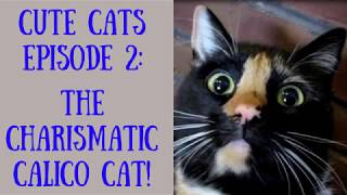 CUTE CATS – Episode Two  |  Calico Cat Reacts to Cameraman While Giving Herself a Bath
