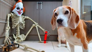 Funny Dog vs Pennywise Killerclown PRANK!