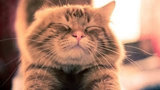 Funny Cats Compilation 2017 – Best Funny Cat Videos Ever
