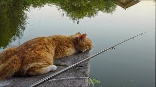 Cute cats on fishing