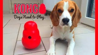 HOW TO Keep Your DOG Entertained : Funny Dog Louie The Beagle