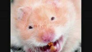 Funny hamsters – funny hamster video ! Part 6