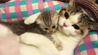 Cute is Not Enough – Funny Cats and Dogs Compilation #39