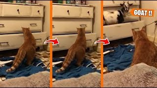 EPIC LAUGH Funniest Scared Cat Home 2019 Best of Funny cat Videos.#6