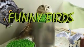 funniest bird compilation, funny bird, cute bird, crazy birds, dancing bird