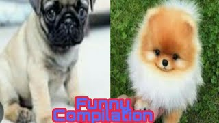 Cute Dog Compilation || Cute dogs || Funny videos