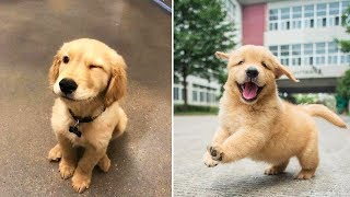 ♥Cute Puppies Doing Funny Things 2020♥ #4  Cutest Dogs