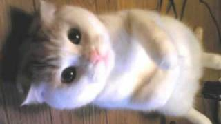 Very Funny Cats 68