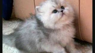 Cute cats & dogs