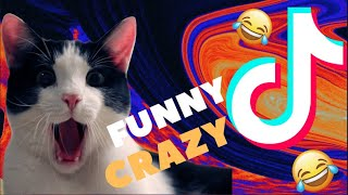 Funny cats in 2020 | Part 5 | Tik Tok