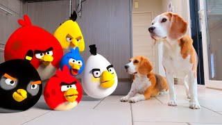 DOGS vs ANGRY BIRDS in REAL LIFE ANIMATION  : Funny Dogs Louie & Marie