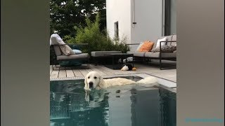 Funny and Cute Dogs Playing in the Water