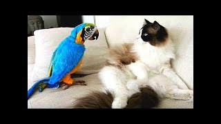 Baby Animals, Funny Parrots and Cute Birds Compilation Funniest Moments.