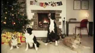 Cute Dogs Singing to Jingle Bells