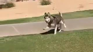 Super Cutiest Funny Dogs Videos – Best Laughs out of loud Funny Dogs