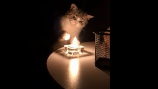Best Cute Cats Compilation Ever 2019
