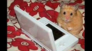 ♥Cute & Funny Hamsters♥