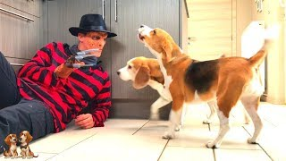 Dogs Vs Freddy Krueger Prank : Cute Dogs Louie & Marie The Beagles