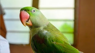Most Entertaining Parrot Ever | Funny Parrot talking | Funny Birds | Parrot talking